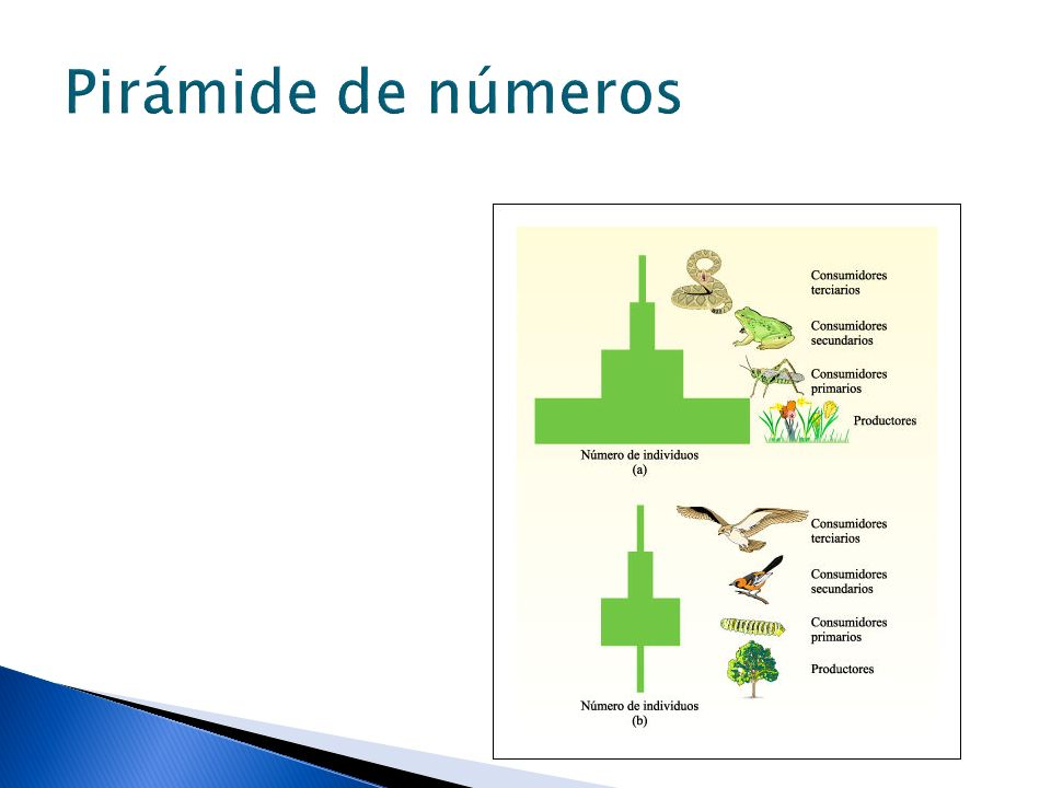 Pirámide de números