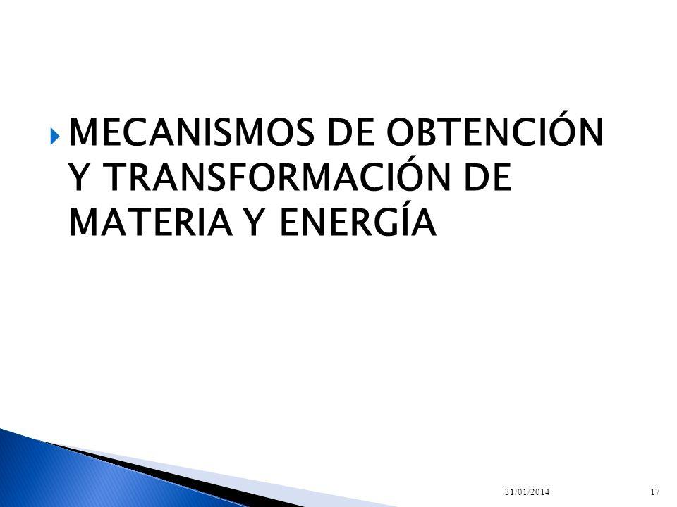 MECANISMOS DE OBTENCIÓN Y TRANSFORMACIÓN DE MATERIA Y ENERGÍA