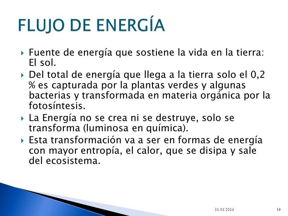 FLUJO DE ENERGÍA Fuente de energía que sostiene la vida en la tierra: El sol.