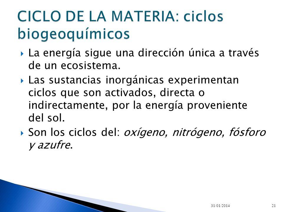 CICLO DE LA MATERIA: ciclos biogeoquímicos