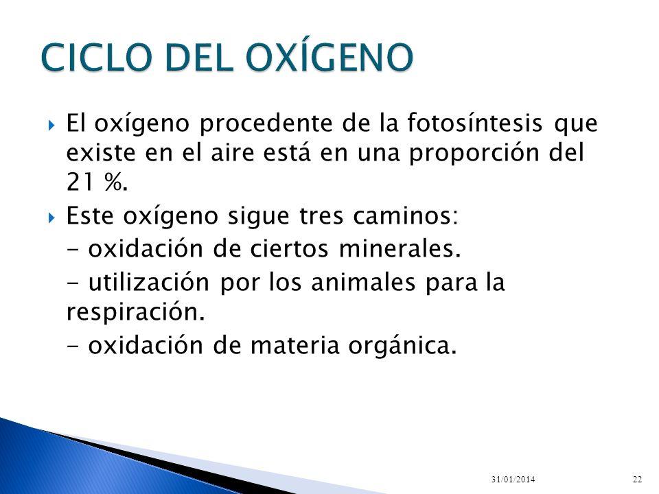 CICLO DEL OXÍGENO El oxígeno procedente de la fotosíntesis que existe en el aire está en una proporción del 21 %.