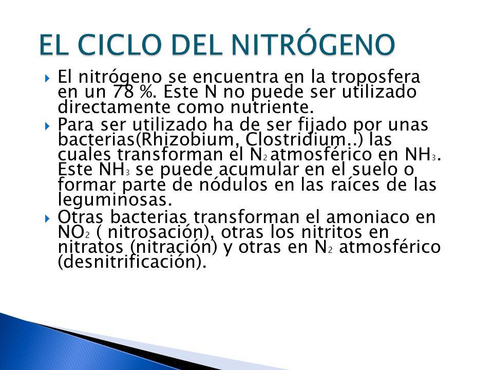 EL CICLO DEL NITRÓGENO El nitrógeno se encuentra en la troposfera en un 78 %. Este N no puede ser utilizado directamente como nutriente.