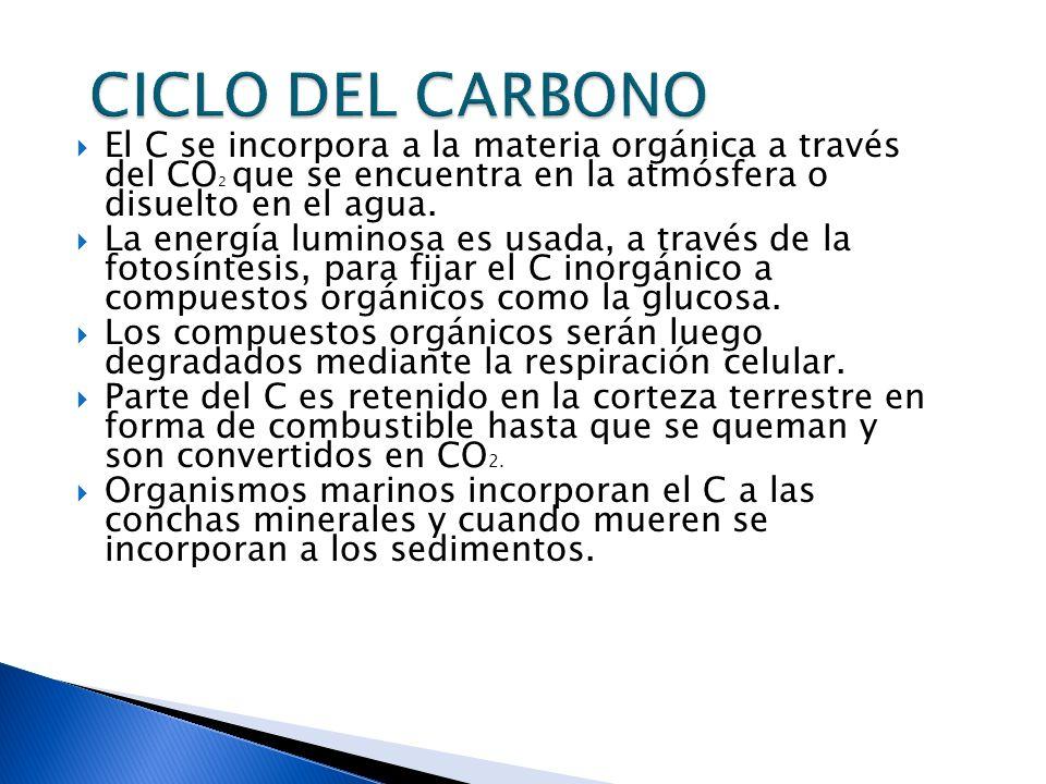CICLO DEL CARBONO El C se incorpora a la materia orgánica a través del CO2 que se encuentra en la atmósfera o disuelto en el agua.