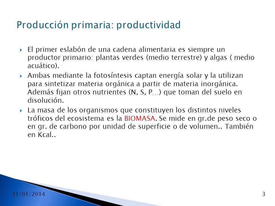 Producción primaria: productividad