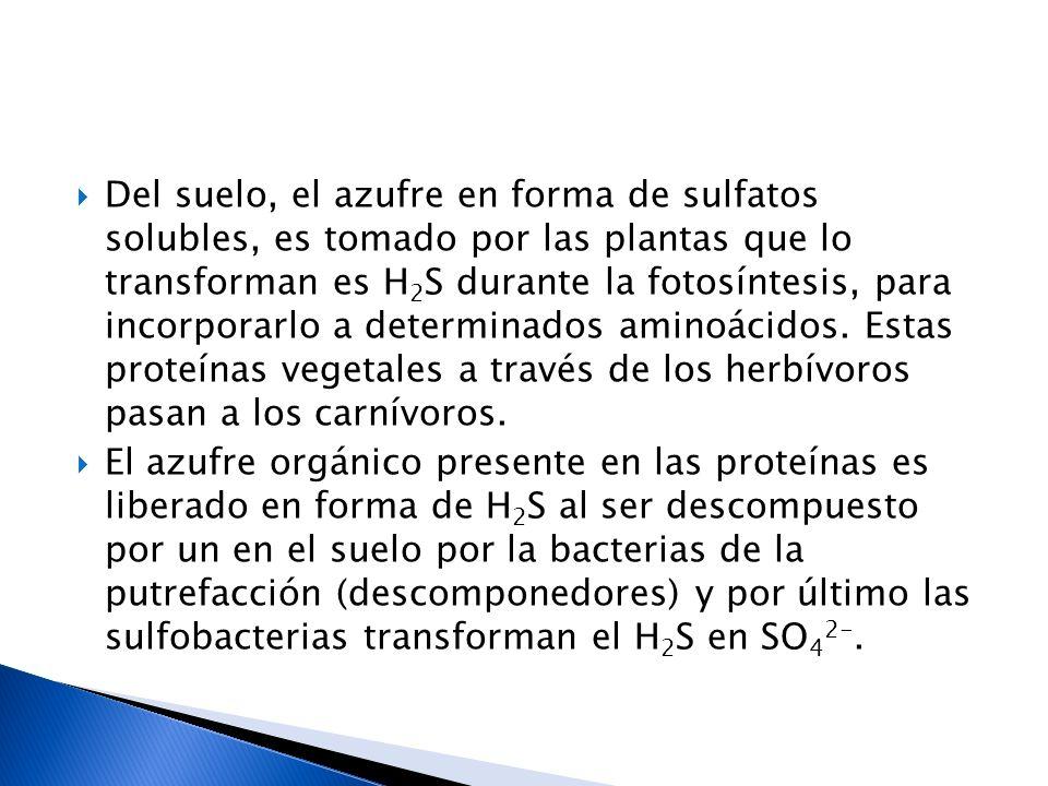 Del suelo, el azufre en forma de sulfatos solubles, es tomado por las plantas que lo transforman es H2S durante la fotosíntesis, para incorporarlo a determinados aminoácidos. Estas proteínas vegetales a través de los herbívoros pasan a los carnívoros.