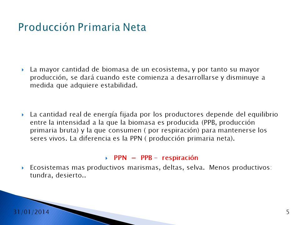 Producción Primaria Neta