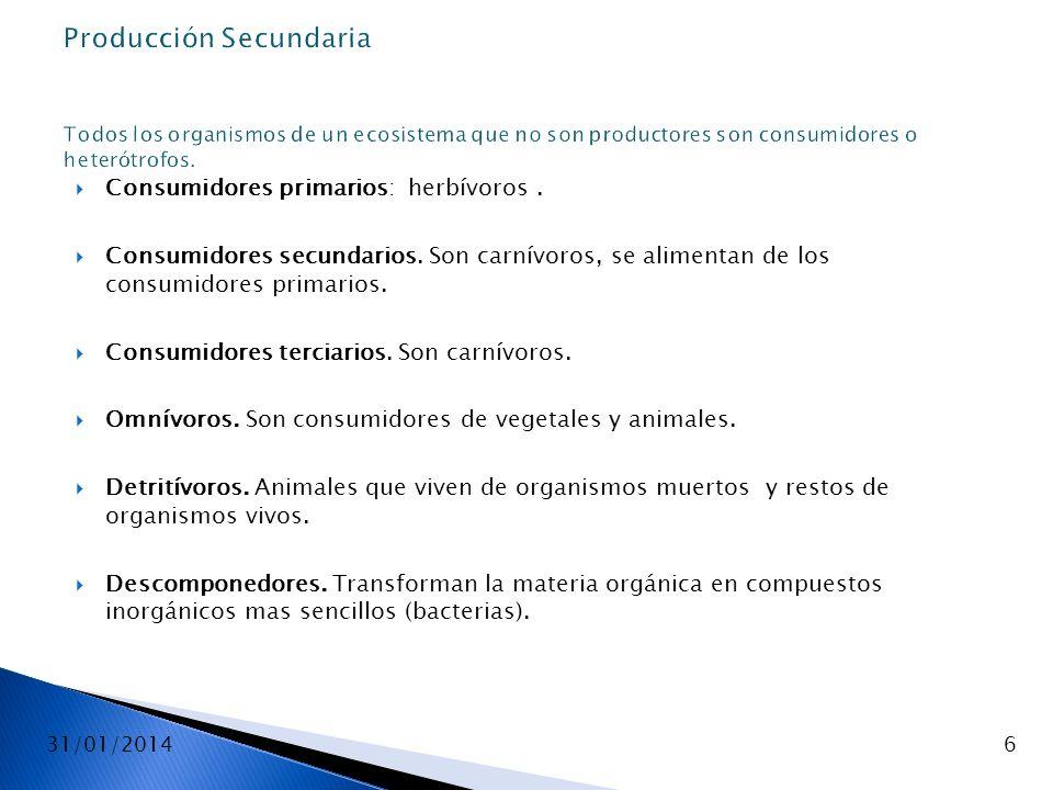 Producción Secundaria Todos los organismos de un ecosistema que no son productores son consumidores o heterótrofos.