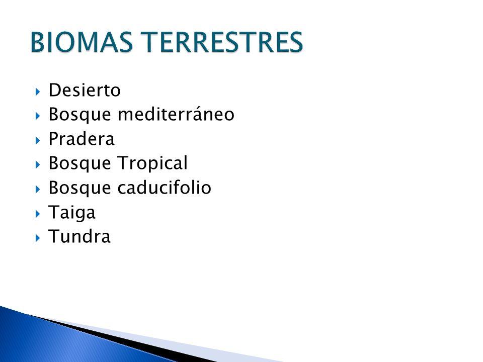 BIOMAS TERRESTRES Desierto Bosque mediterráneo Pradera Bosque Tropical