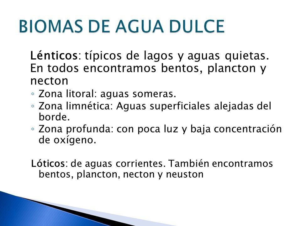 BIOMAS DE AGUA DULCE Lénticos: típicos de lagos y aguas quietas. En todos encontramos bentos, plancton y necton.