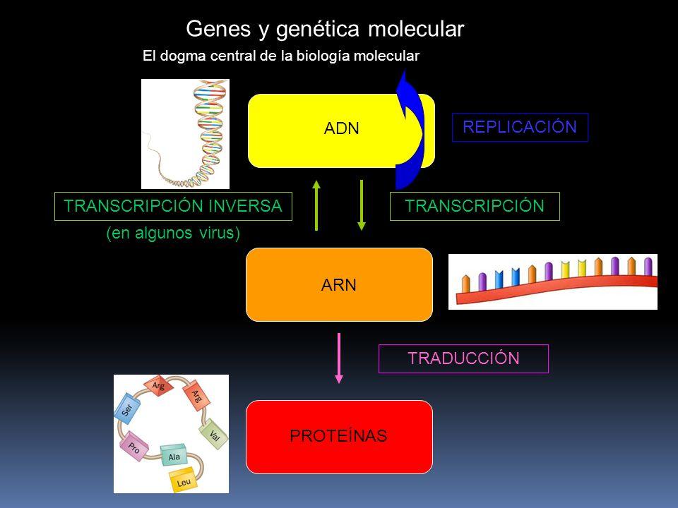 Genes y genética molecular