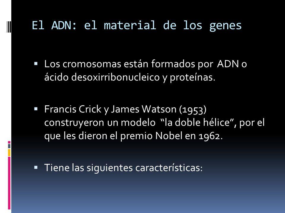 El ADN: el material de los genes
