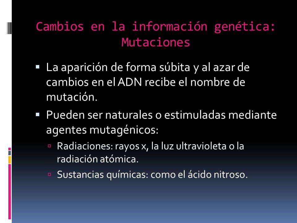 Cambios en la información genética: Mutaciones