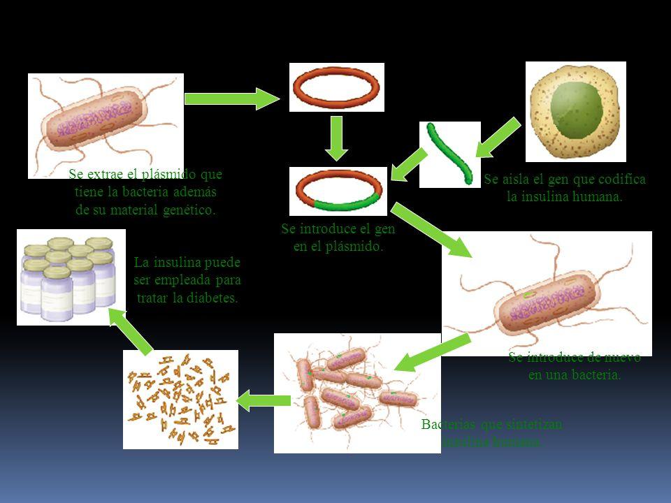 Se aisla el gen que codifica la insulina humana.