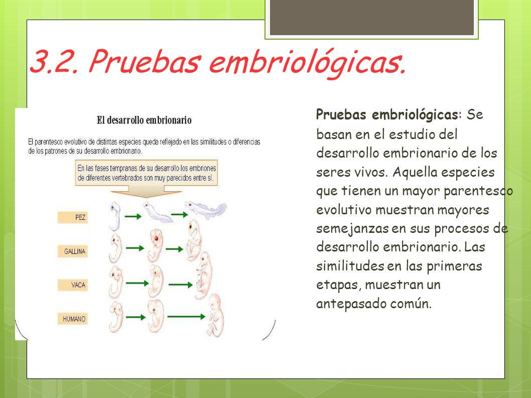 3.2. Pruebas embriológicas.