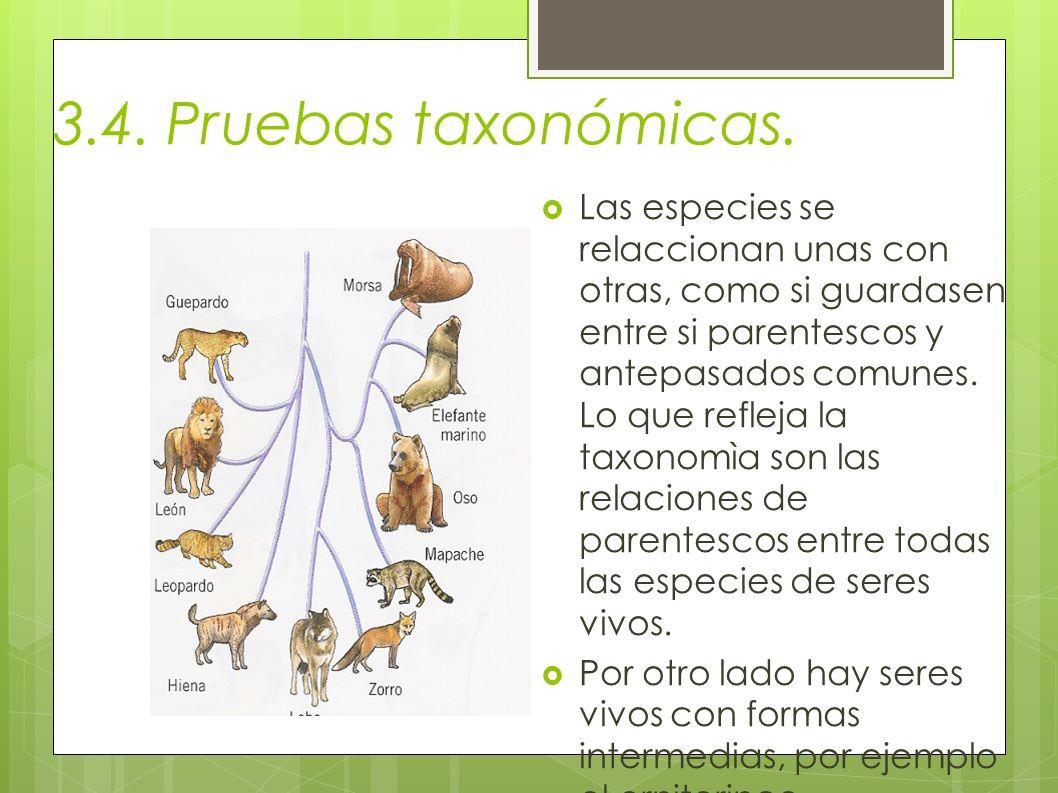 3.4. Pruebas taxonómicas.
