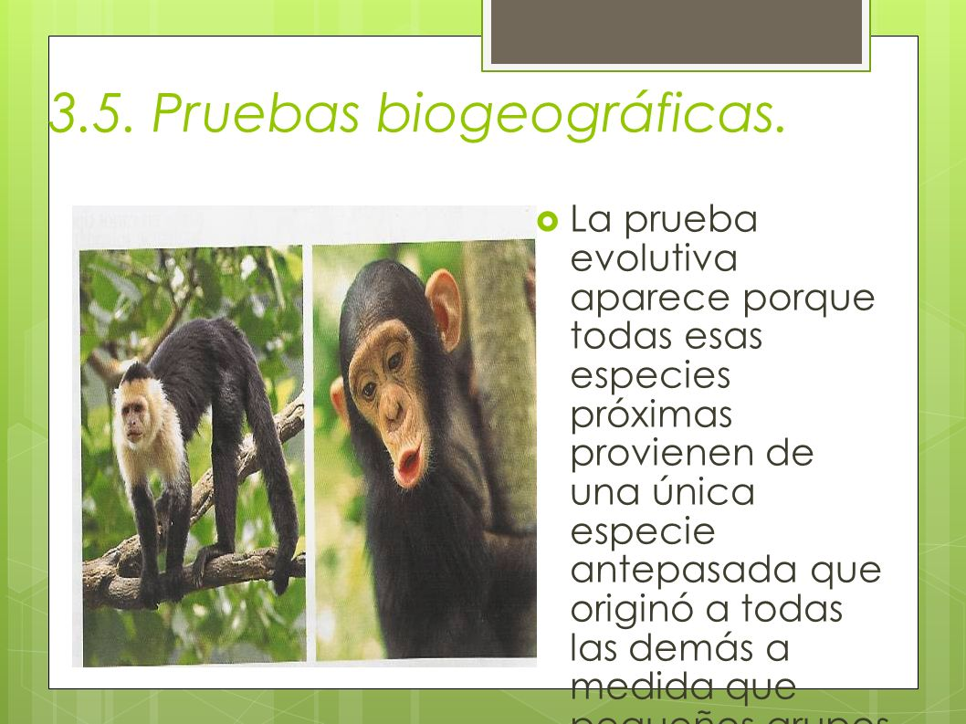 3.5. Pruebas biogeográficas.