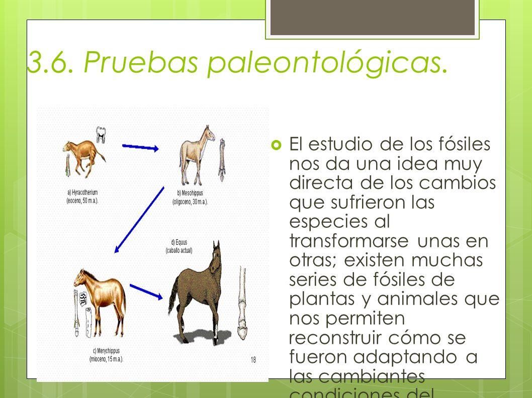 3.6. Pruebas paleontológicas.