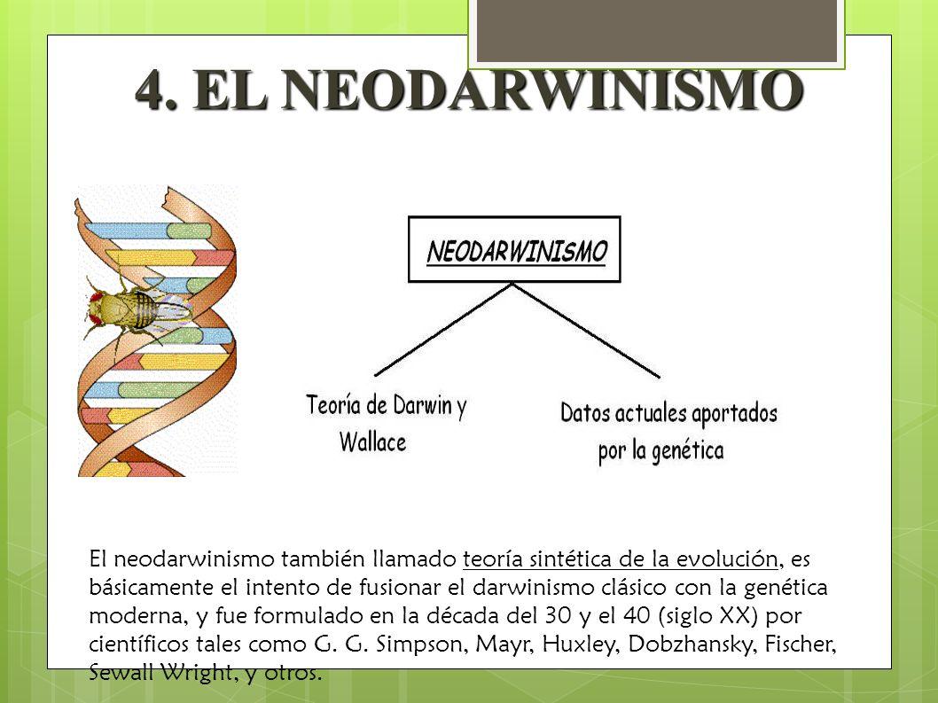 4. EL NEODARWINISMO