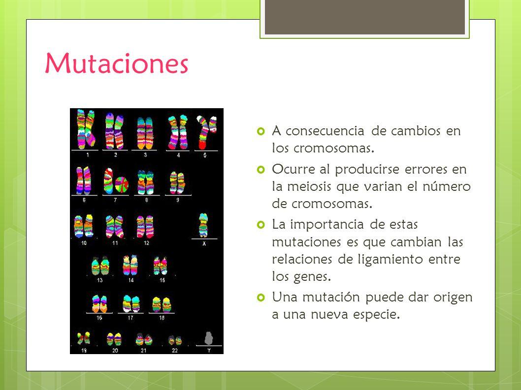 Mutaciones A consecuencia de cambios en los cromosomas.
