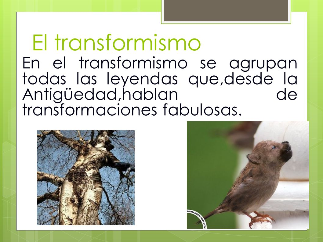 El transformismoEn el transformismo se agrupan todas las leyendas que,desde la Antigüedad,hablan de transformaciones fabulosas.