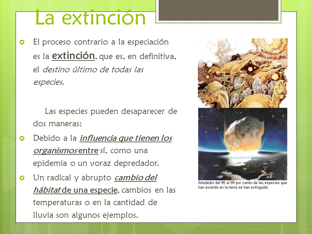 La extinciónEl proceso contrario a la especiación es la extinción, que es, en definitiva, el destino último de todas las especies.