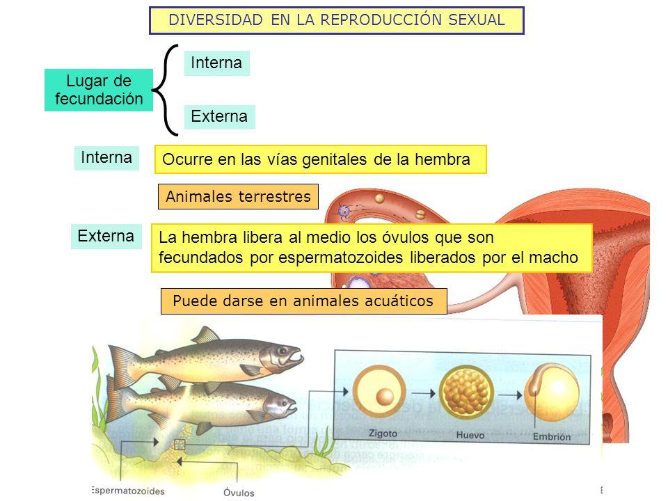 Ocurre en las vías genitales de la hembra