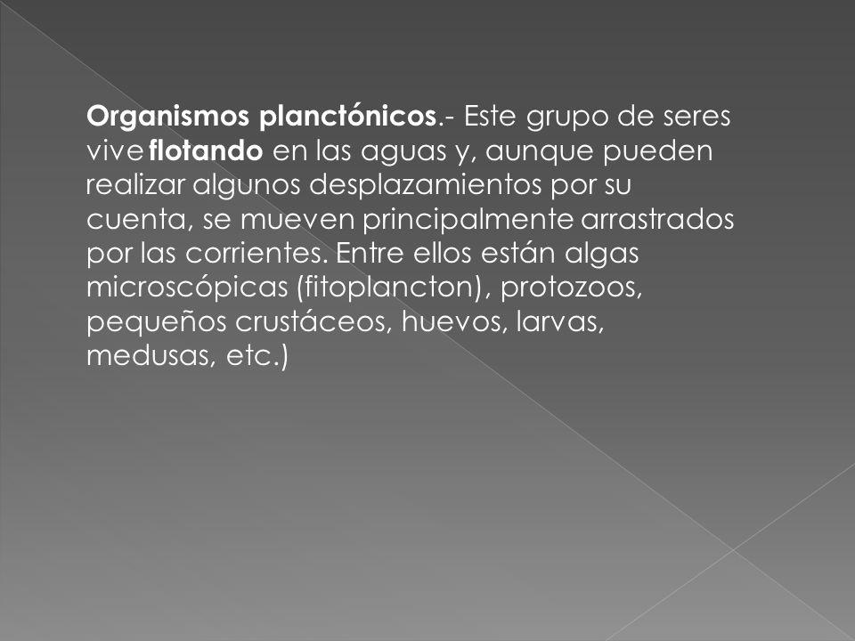 Organismos planctónicos