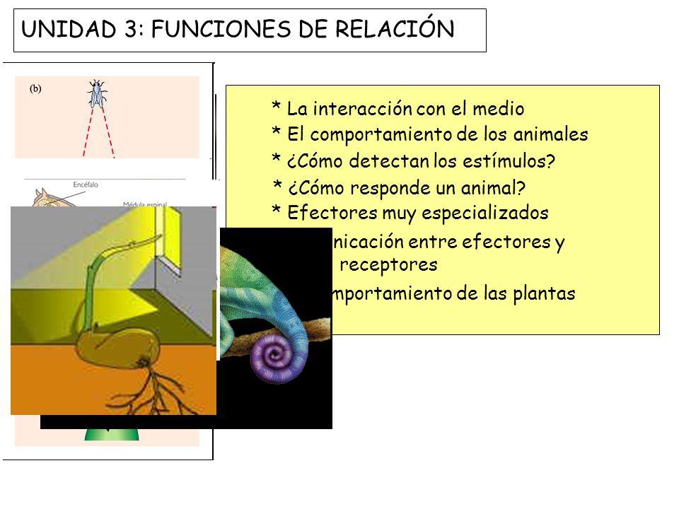UNIDAD 3: FUNCIONES DE RELACIÓN
