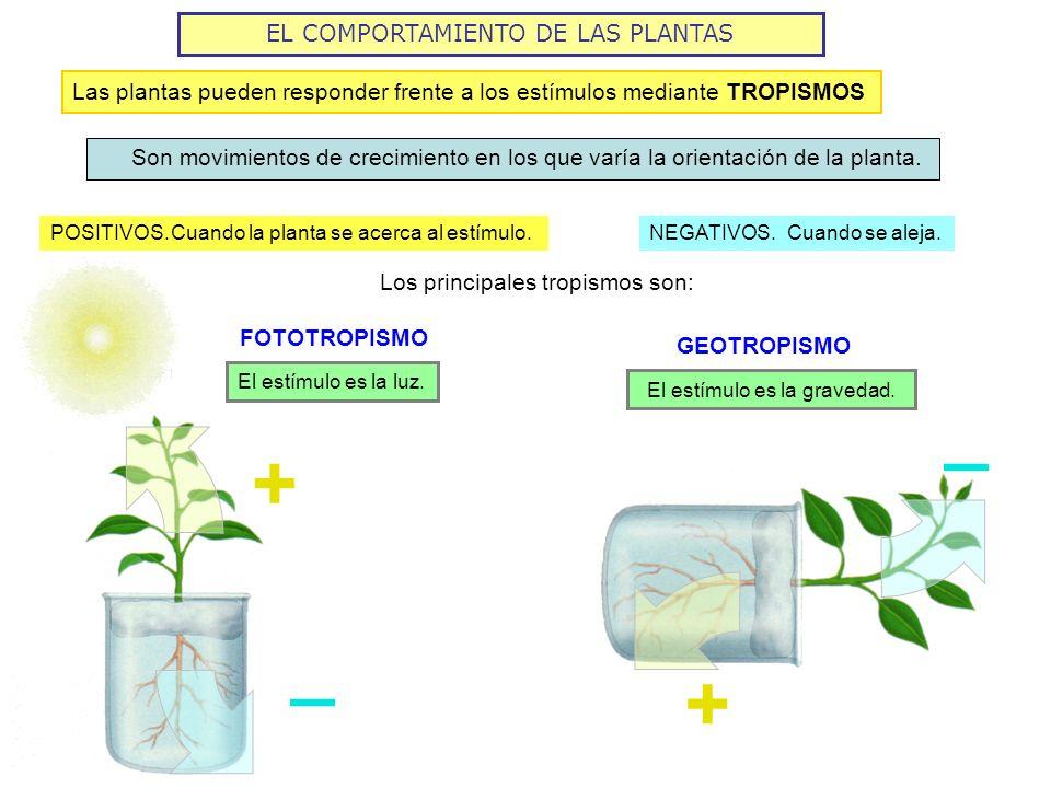 _ + _ + EL COMPORTAMIENTO DE LAS PLANTAS