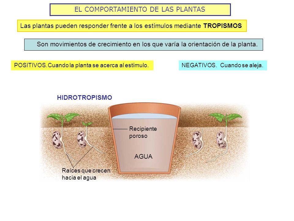 EL COMPORTAMIENTO DE LAS PLANTAS