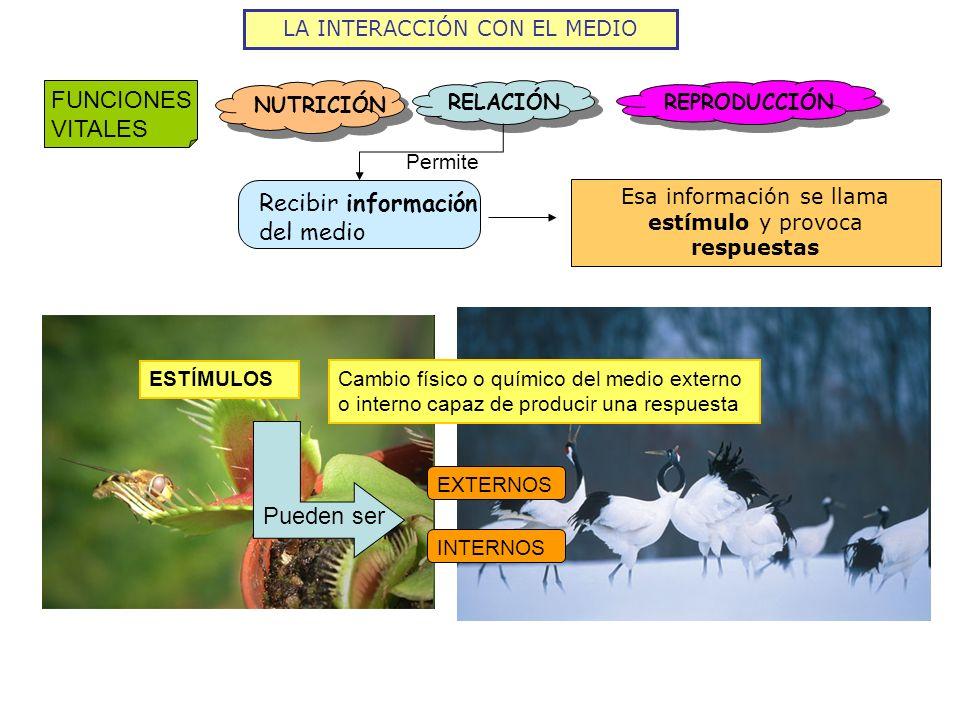 Recibir información del medio