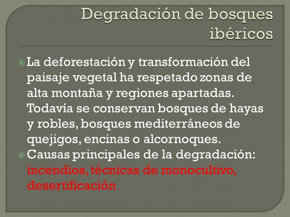 Degradación de bosques ibéricos