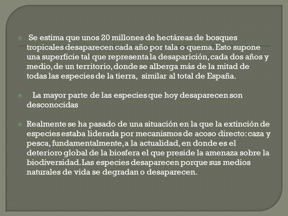 Se estima que unos 20 millones de hectáreas de bosques tropicales desaparecen cada año por tala o quema. Esto supone una superficie tal que representa la desaparición, cada dos años y medio, de un territorio, donde se alberga más de la mitad de todas las especies de la tierra, similar al total de España.