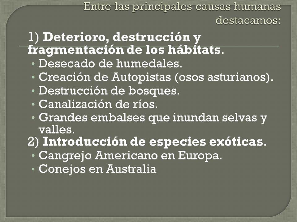 Entre las principales causas humanas destacamos: