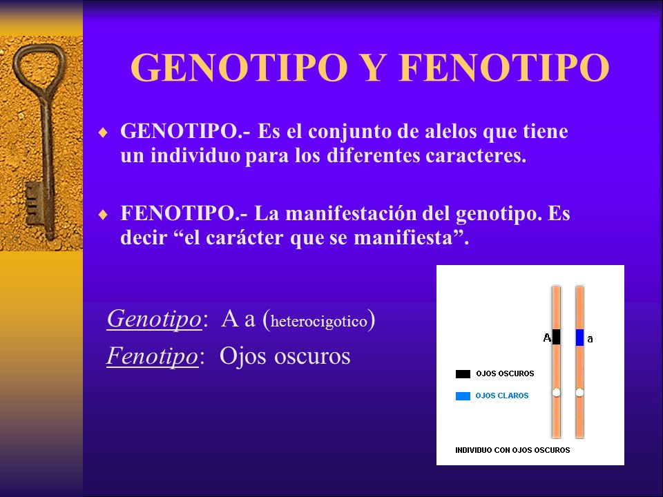 GENOTIPO Y FENOTIPO Genotipo: A a (heterocigotico)