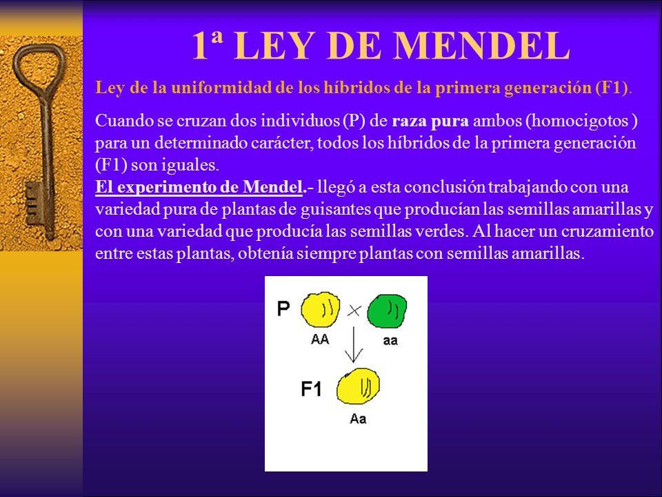 1ª LEY DE MENDEL Ley de la uniformidad de los híbridos de la primera generación (F1).