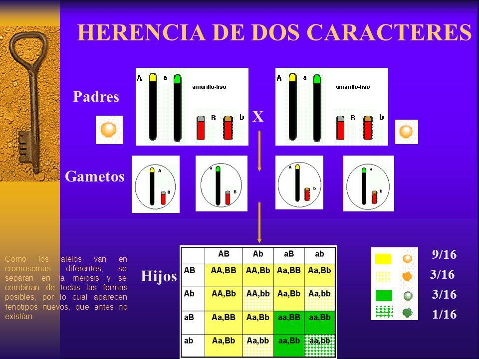 HERENCIA DE DOS CARACTERES