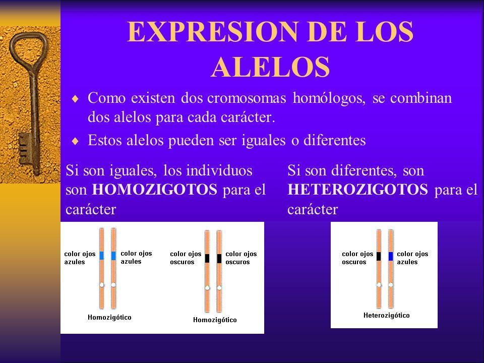 EXPRESION DE LOS ALELOS