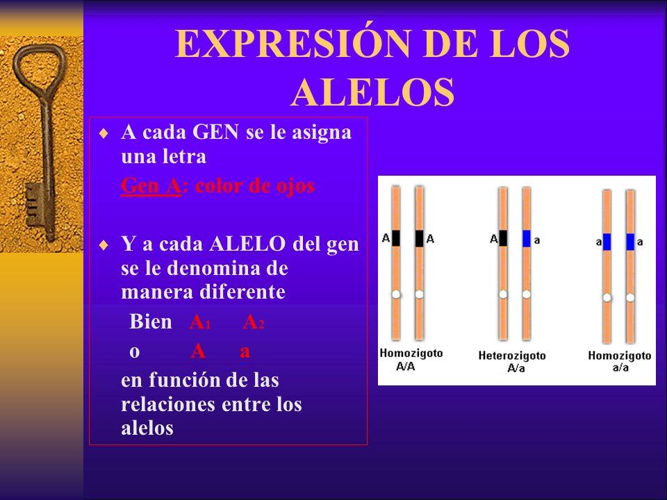 EXPRESIÓN DE LOS ALELOS