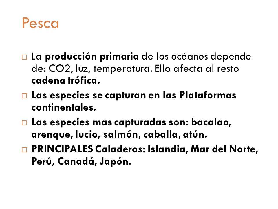 PescaLa producción primaria de los océanos depende de: CO2, luz, temperatura. Ello afecta al resto cadena trófica.