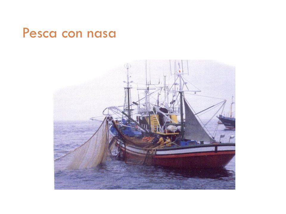 Pesca con nasa