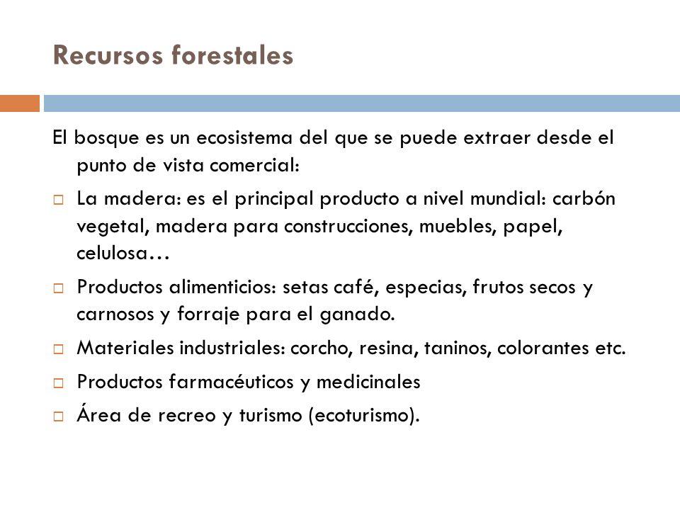 Recursos forestales El bosque es un ecosistema del que se puede extraer desde el punto de vista comercial: