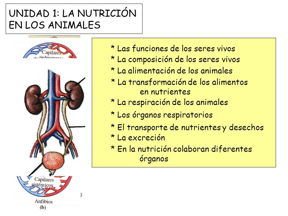 UNIDAD 1: LA NUTRICIÓN EN LOS ANIMALES