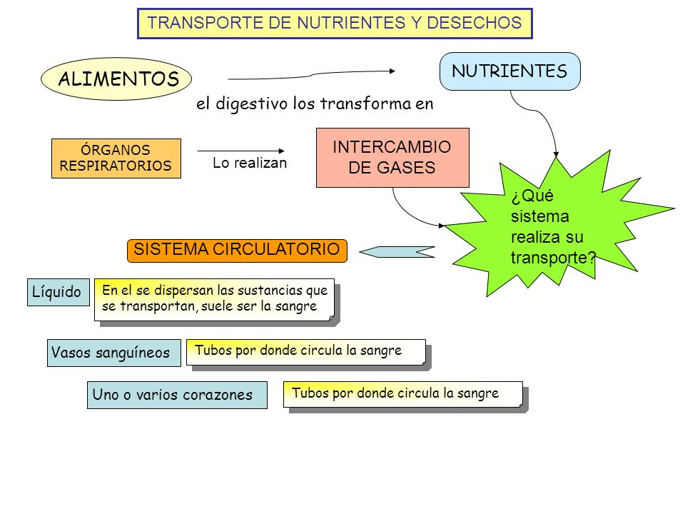 ALIMENTOS TRANSPORTE DE NUTRIENTES Y DESECHOS NUTRIENTES