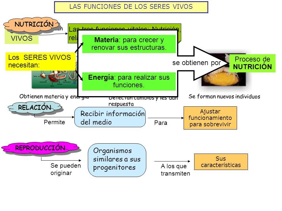 Las tres funciones vitales: Nutrición, relación y reproducción