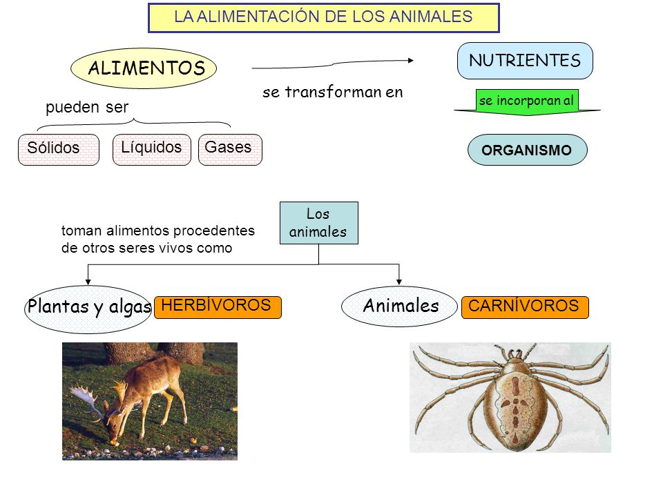 LA ALIMENTACIÓN DE LOS ANIMALES