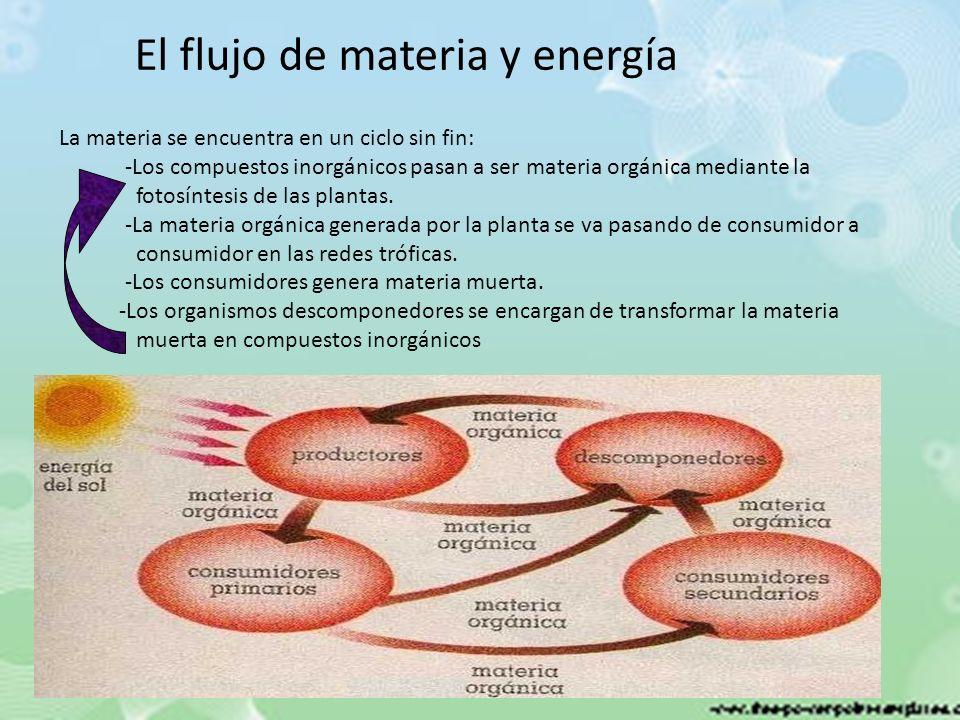 El flujo de materia y energía