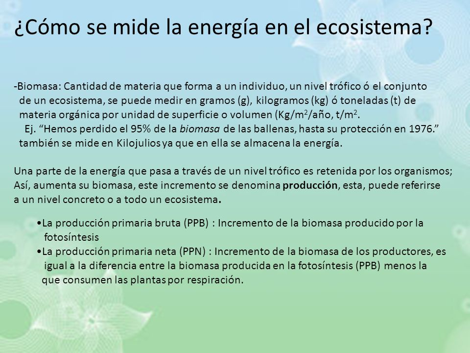 ¿Cómo se mide la energía en el ecosistema