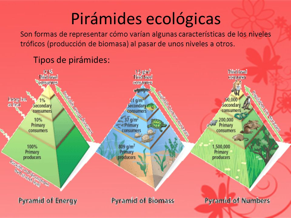 Pirámides ecológicas Tipos de pirámides: