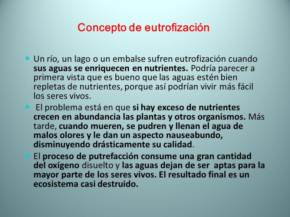 Concepto de eutrofización